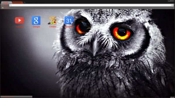 Orange eyed owl Chrome Theme