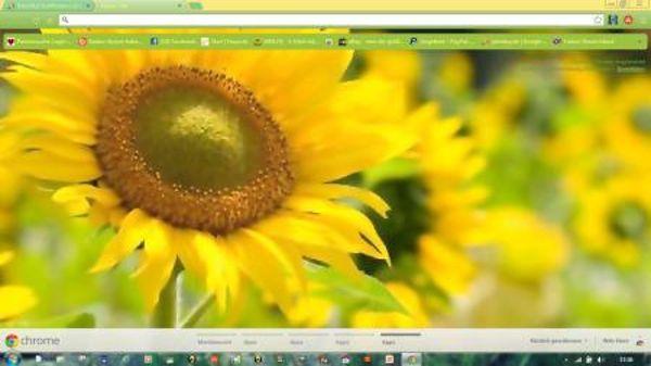 sc_sunflower Chrome Theme