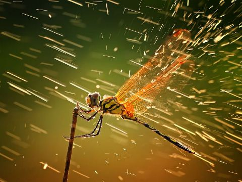 Dragonfly Indonesia Best Example of Rain Photography for Inspiration