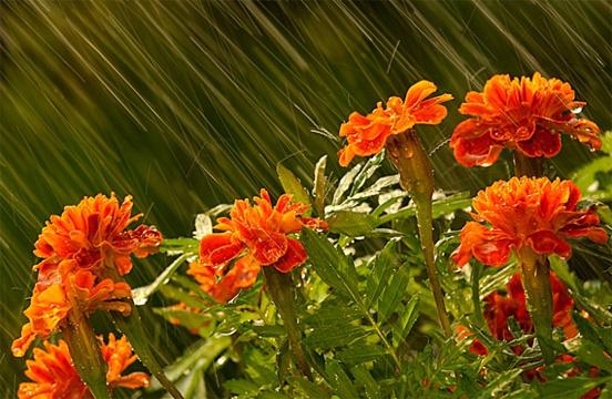 Flower In Rain Best Example