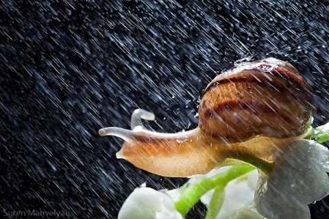 Weather survivors Photography