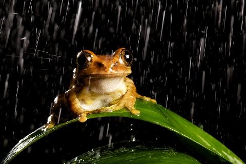 enjoying the rain Best Example of Rain Photography for Inspiration