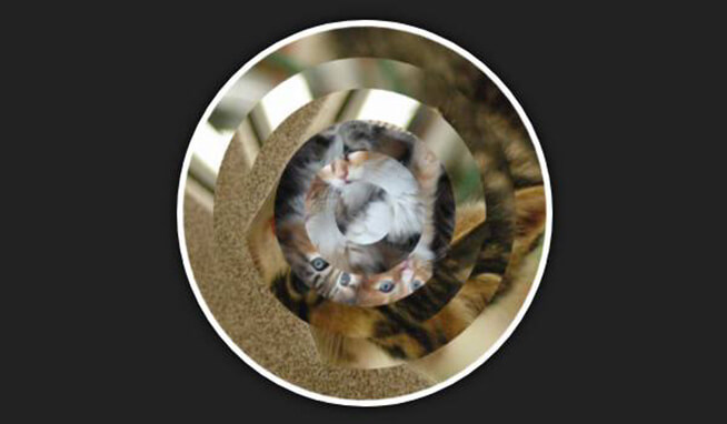 circular Image Hover Effect